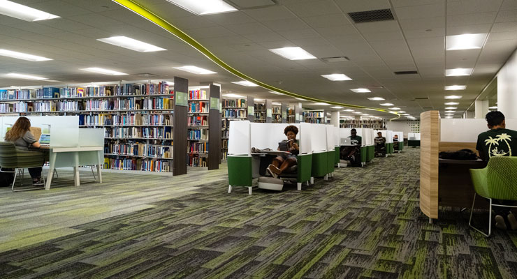 USF students studying at the library