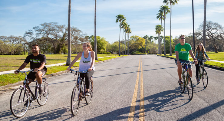 Four USF students taking a bike ride down a road lined with palm trees