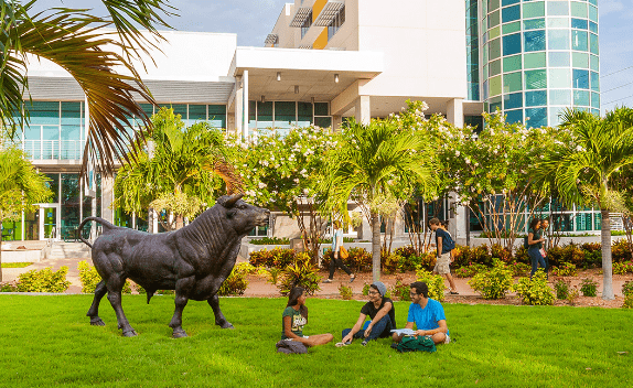USF students sitting together outside on campus by the bull discussing admissions.